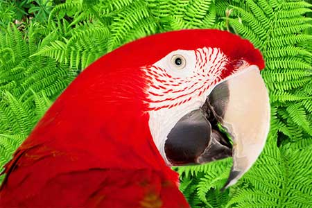 Beautiful Big Red Gentle Parrot Jax